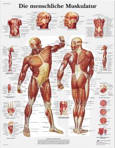 Medizinische Poster
