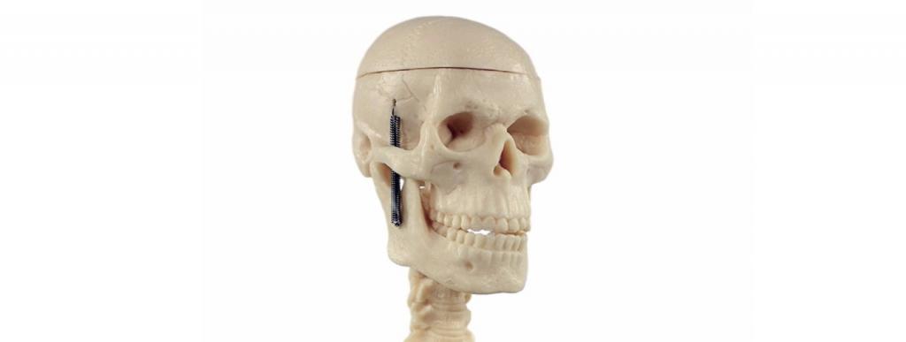 Skelett Modelle Medizinstudium