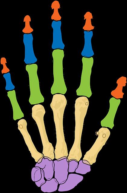 Skelett der Hand