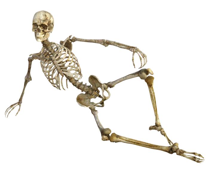 Skelett kaufen: Ratgeber & Bestseller 2018 | Anatomie-Skelett.net
