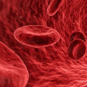 Menschliche Organe: Blut