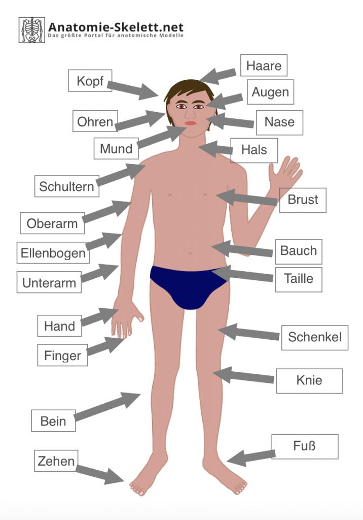 Körperteile Arbeitsblatt beschriftet