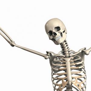 Organe des Körpers: Skelett