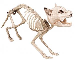 Tierskelette kaufen