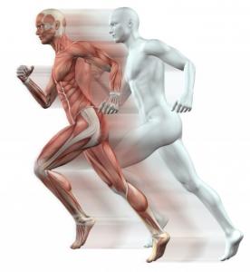 Bewegungsapparat des Menschen